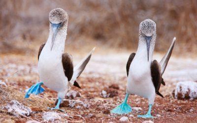 Ecuador ja Galapagossaaret 5.-20.11.2021